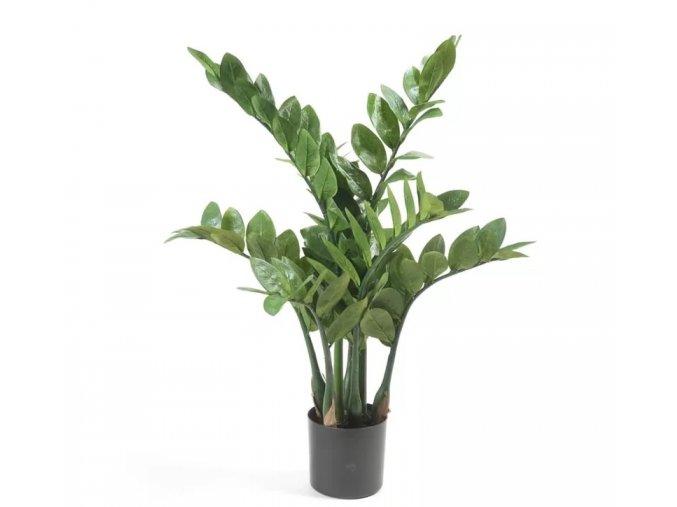 Zamioculcas+Plant+in+Planter