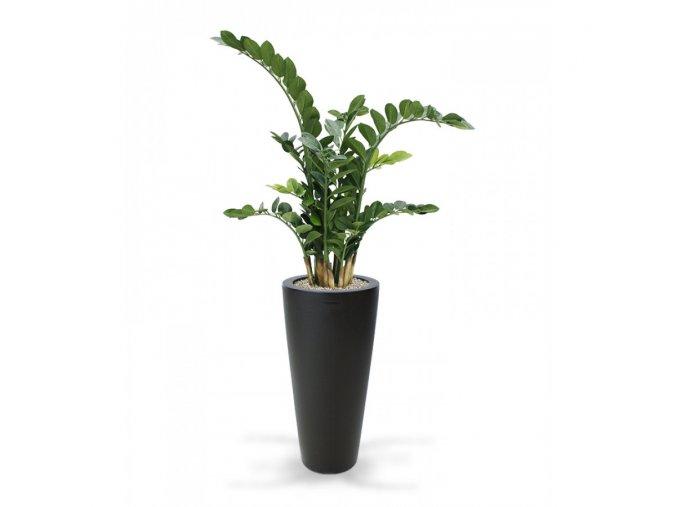 Umělá rostlina Zamioculcas (100cm)
