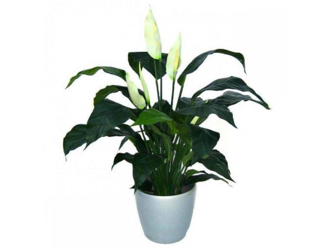 Umělá rostlina Spatiphyllum DeLuxe (80cm)