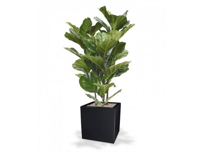 Umělá rostlina Fikus Lyrata (95cm)