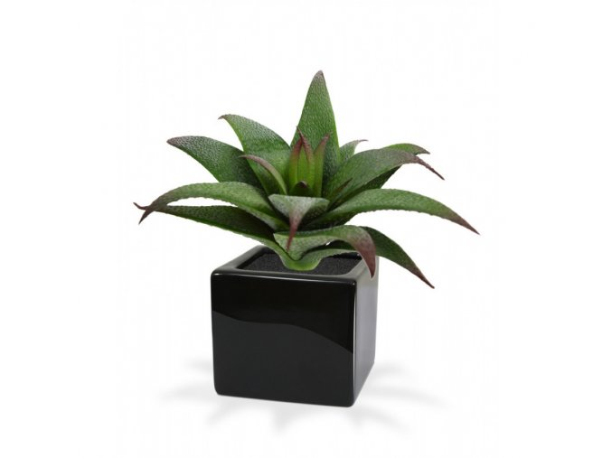 Umělá rostlina Haworthia (13cm)