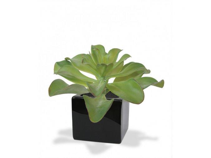 Umělá rostlina Echeveria (20cm)