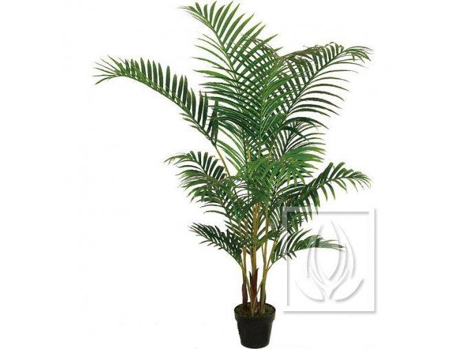 palma areca 140cm