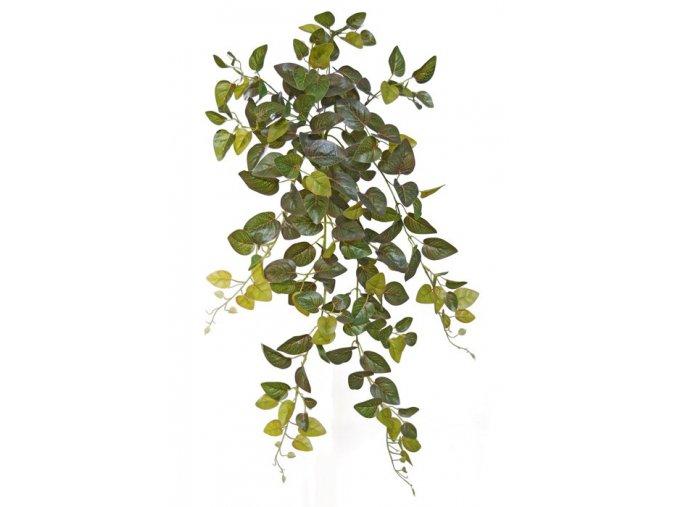 16629 fittonia bush 90 cm green 5459grn