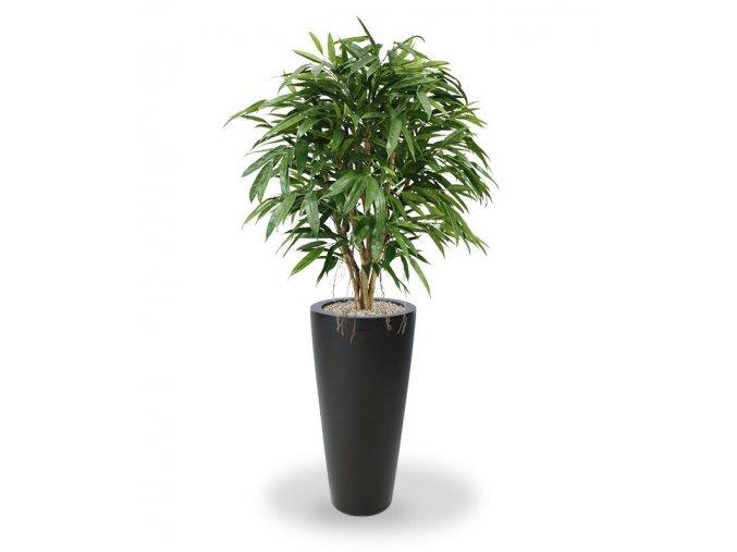 109412 longifolia xl deluxe 120 tondo alto 70 antraciet