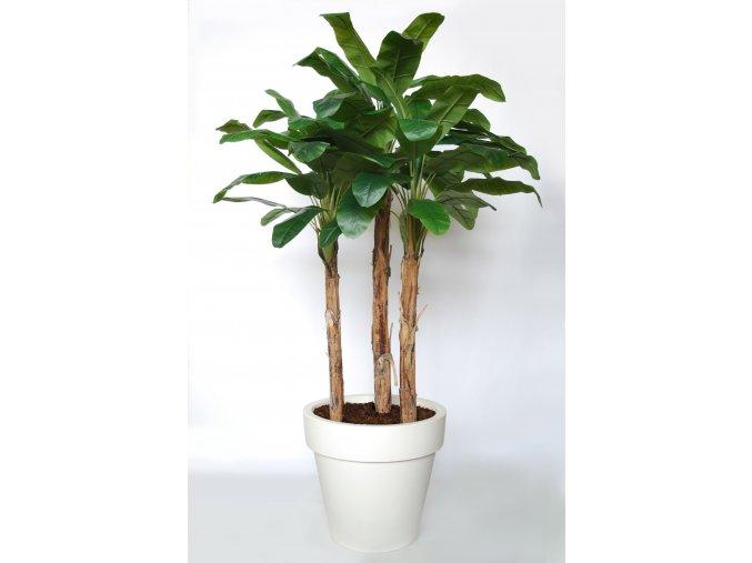 Banana Trees 280 cm Green Orange V5569000