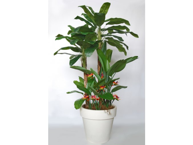 Banana Tropical Arrang 280 cm Grn Ora V5569001