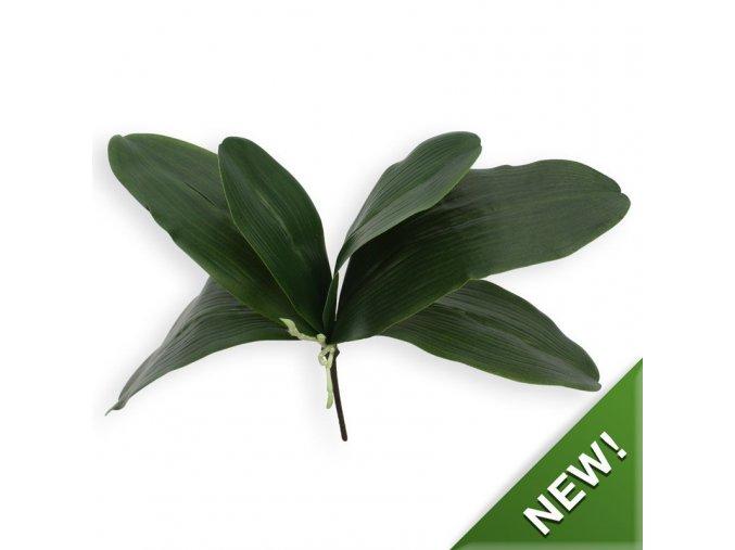 404606 orchidee bladtoef xl x6