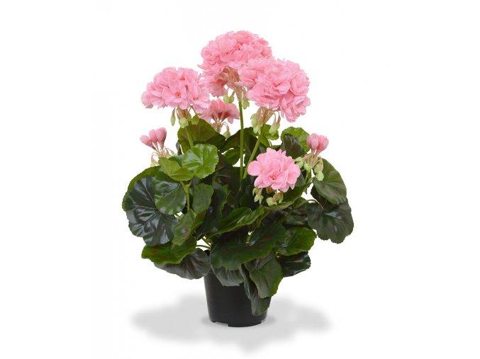 407404rspp10 geranium 40 roze