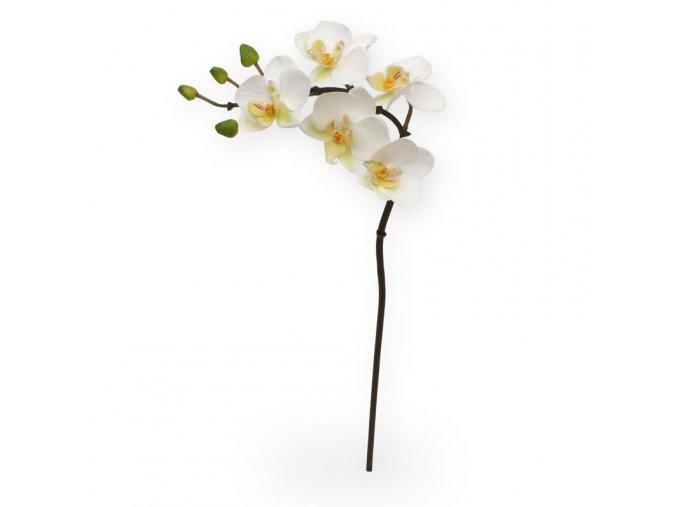 510002 mini phalaenopsis 50 wit
