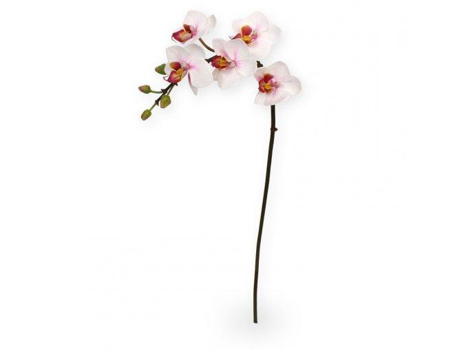 510003 mini phalaenopsis 50 cm rose