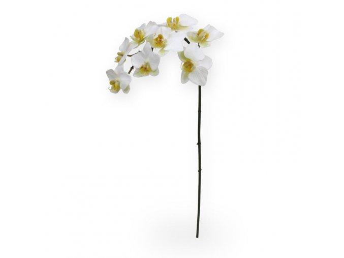 510006 phalaenopsis 80 wit