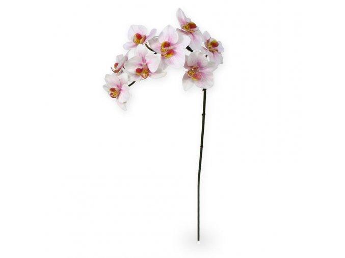 510007 phalaenopsis orchidee 80 rose