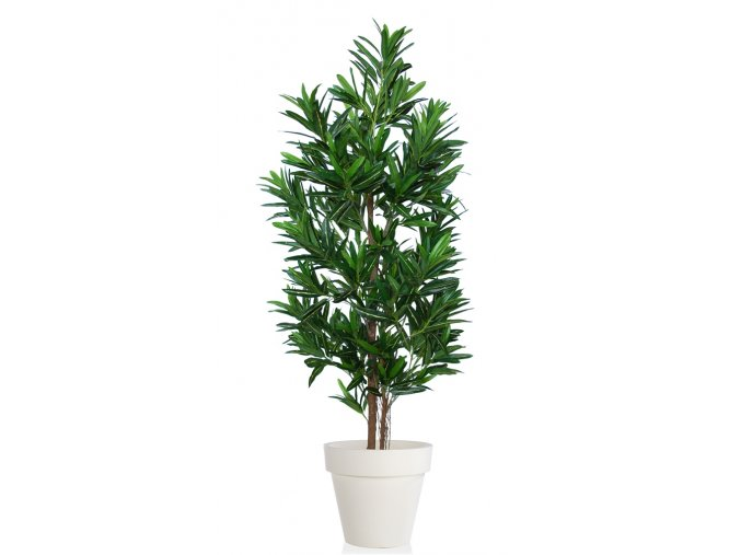 Croton California Tree 170 cm Green Yellow V1078002