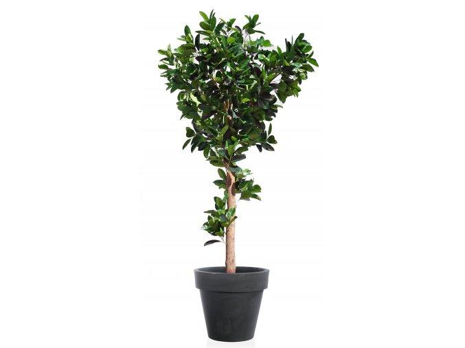 Ficus Elastica Gigantea 400 cm Green V5426010