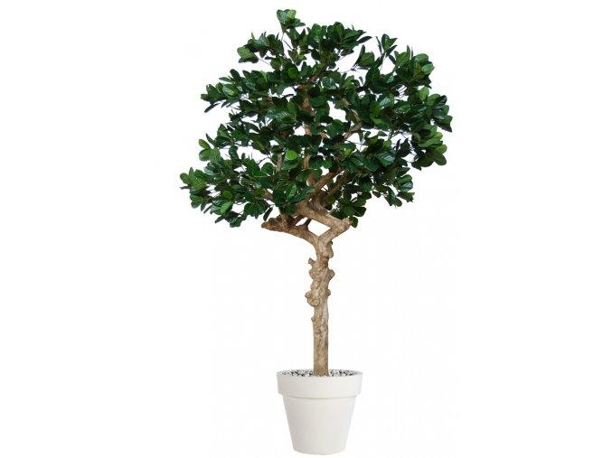 Jackfruit Nidra 250 cm Green V5453003