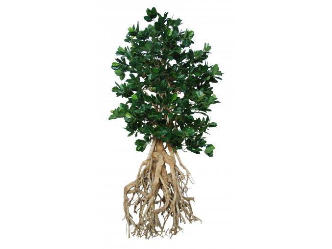 Jackfruit Root Giant 250 cm Green 5443005