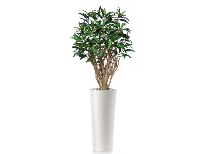 Mango Robusta 200 cm Green V1069012