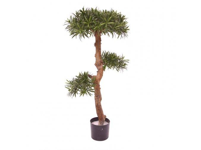 150411uv podocarpus bonsai 1