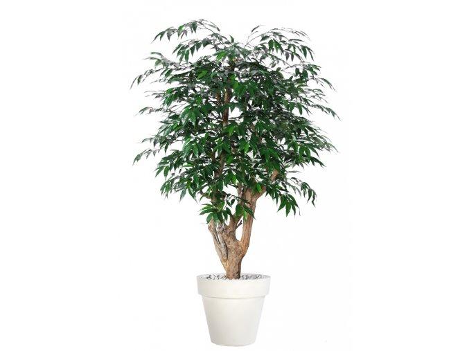 Myrsifolia Malabar 150 cm Green V1068010