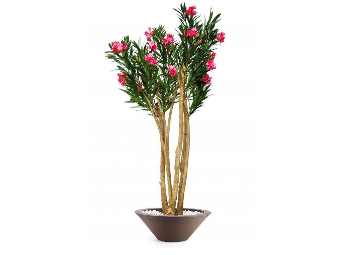 Oleander Florida 240 cm Pink V1079003