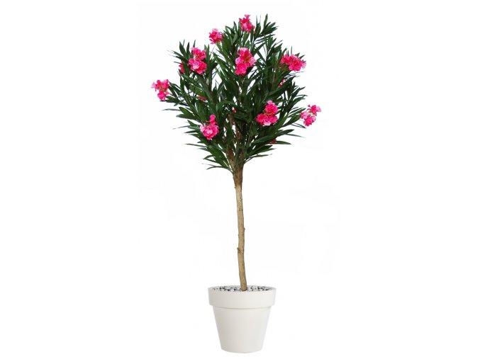 Oleander Globe 200 cm Pink V10779001