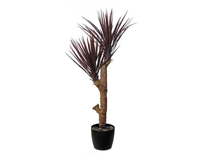 Yucca Linearis Plant 120 cm Brugundy V4231B02