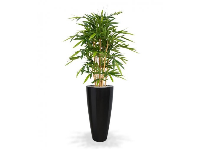 Bambus DLX 120cm