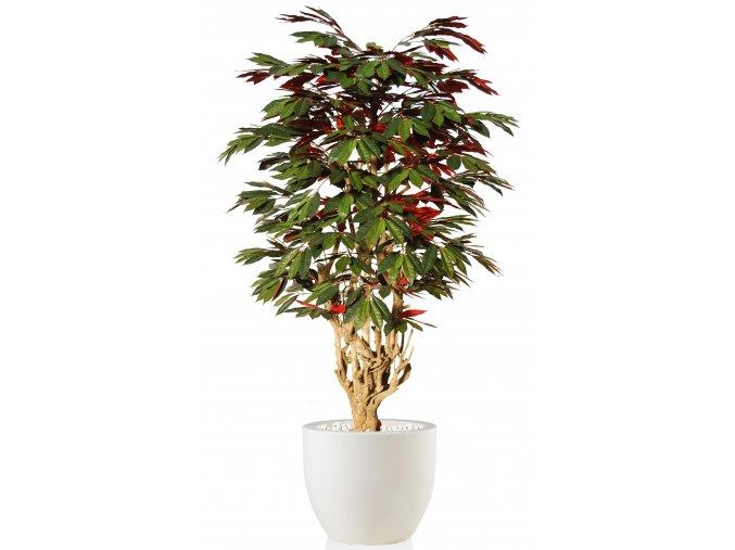 Capensia Malabar 180 cm Green Red V1083006