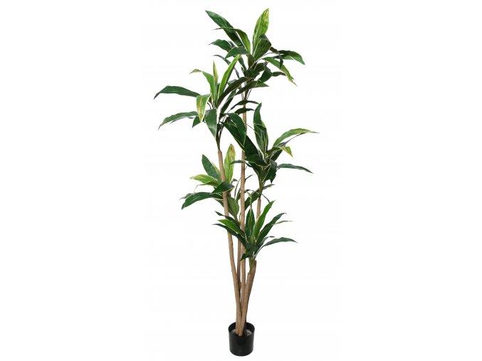 Cordyline Plant w pot 200 cm Green 5546GRN