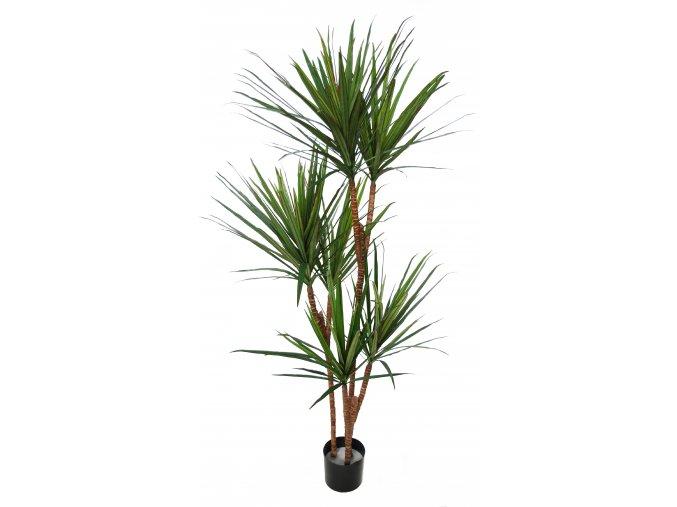 Dracaena Marginata Tree w pot 170 cm Green Red 5547GRD