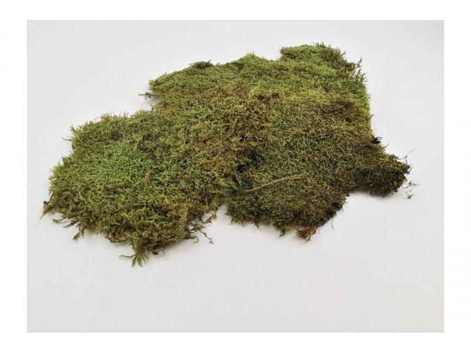 Flat moss light green a