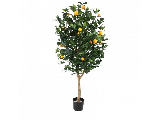 193015 sinaasappelboom gold 150 pp 1