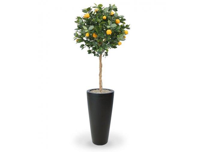 193012 sinaasappelboom op stam 120 tondo 70 antraciet