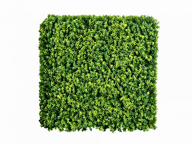 Buxus Long Vario II.