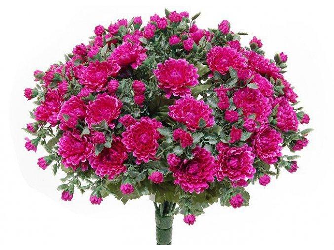 chrysantema LILA