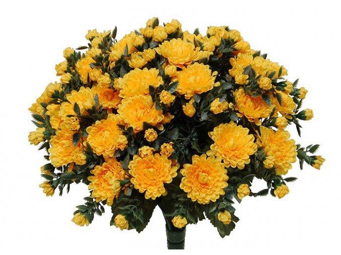 chrysantema YELL