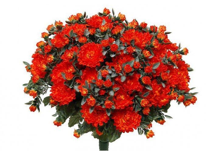 chrysantema ORA