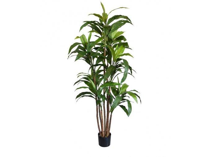 Umělá rostlina Dracena (170cm)
