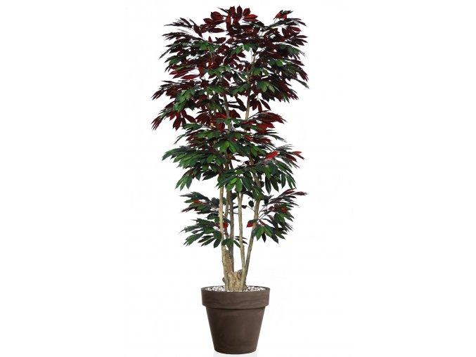 Capensia Nicobar 240 cm Green Red V1083002