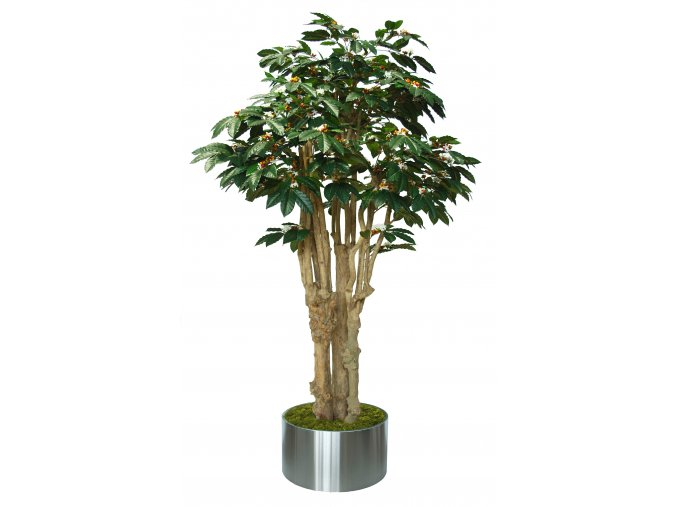 Coffee 3D Tree 220 cm Green V1077009