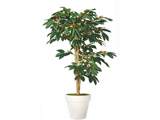 Coffee Florida Tree 150 cm Green V1077008