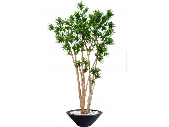 Dracaena Reflexa Florida 260 cm Green V4008A37