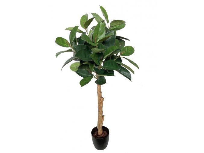 Ficus Elastica Topiary 150 cm Green V5426013