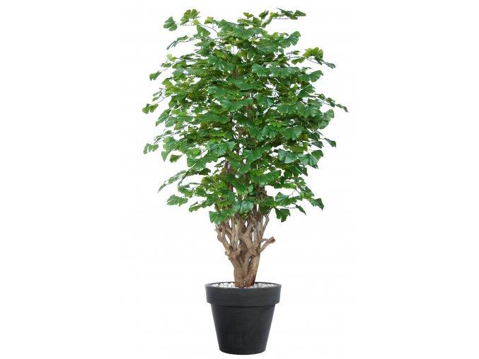 Gynkgo Malabar 180 cm Green V1086012