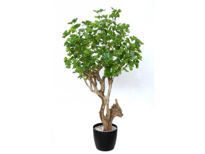 Gynkgo Robustina 120 cm Green 1087003