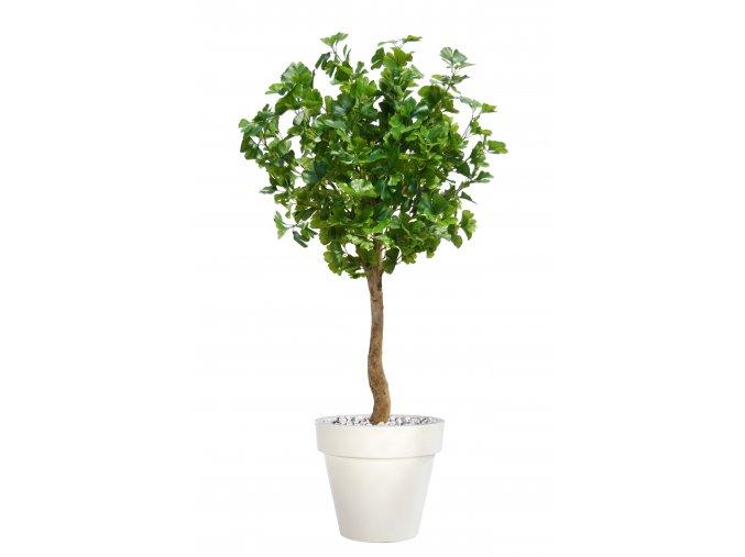 Gynkgo Topiary 150 cm Green V1087004