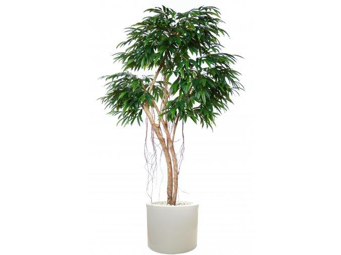 Longifolia Mini Florida 240 cm Green V1089001