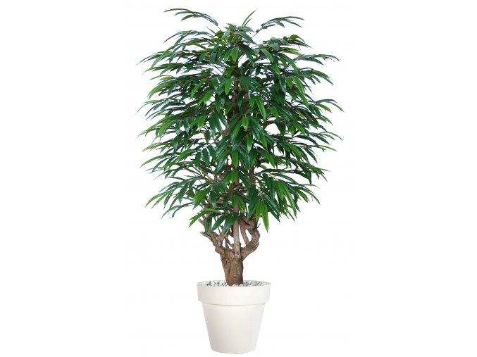 Longifolia Mini Malabar 180 cm Green V1089005