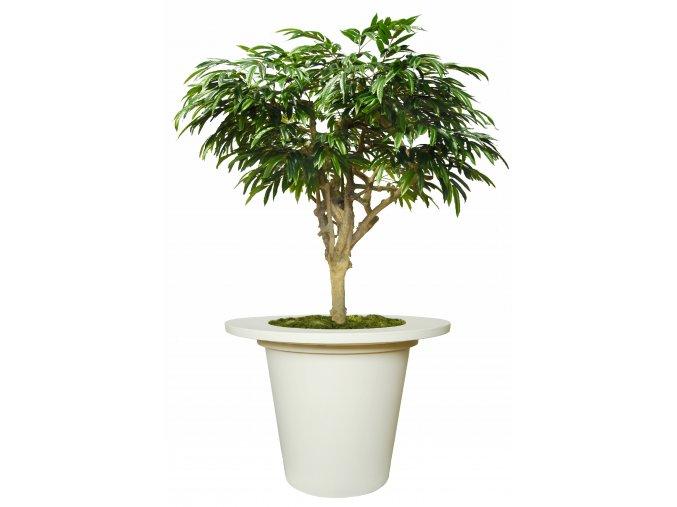 Longifolia Mini Nidra 320 cm Green V1089014